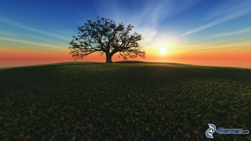 osamelý strom, západ slnka za lúkou