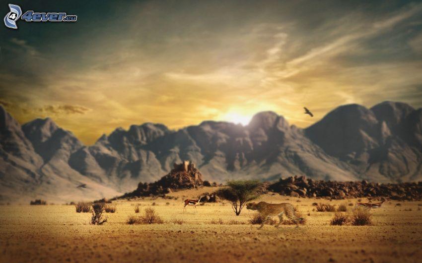 savana, západ slnka nad horami