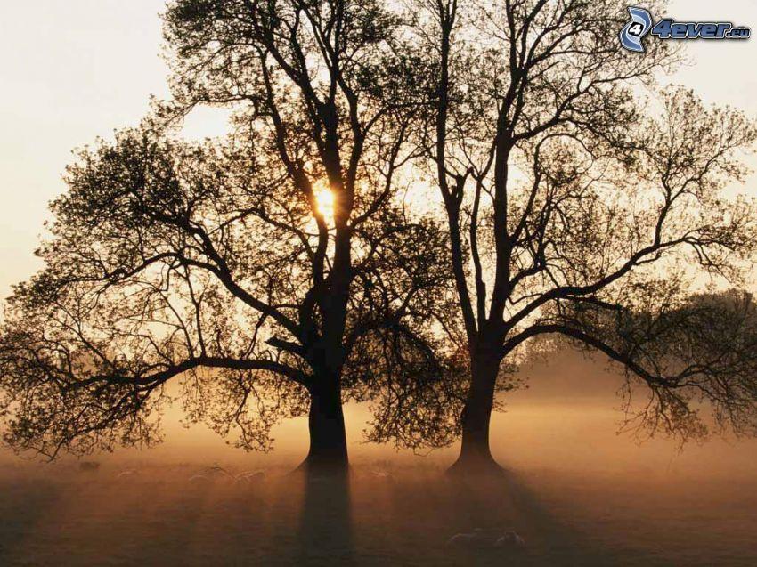 siluety stromov, prízemná hmla, západ slnka za stromom
