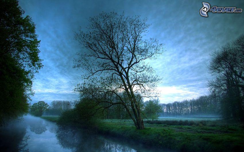 strom nad riekou, prízemná hmla, zahmlené ráno, stromy