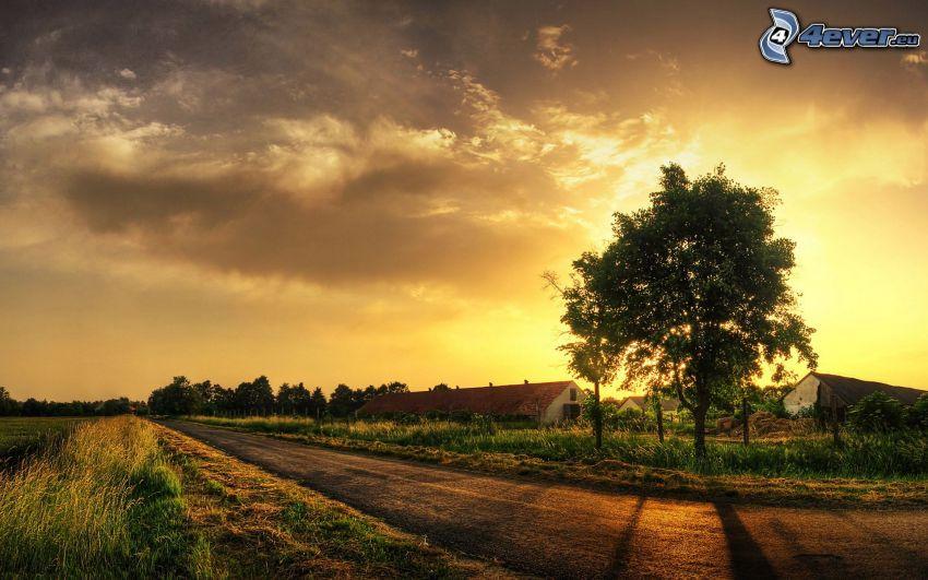 strom pri ceste, západ slnka za stromom, farma