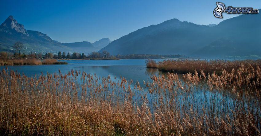 tráva na brehu jazera, vysoká tráva, kopce