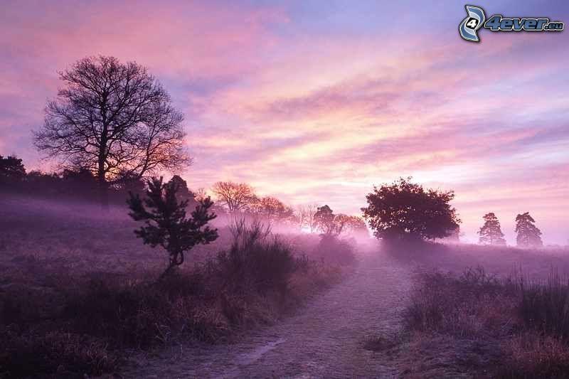 východ slnka, prízemná hmla, lúka, stromy