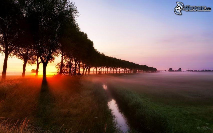 východ slnka, stromová alej, pole, potok