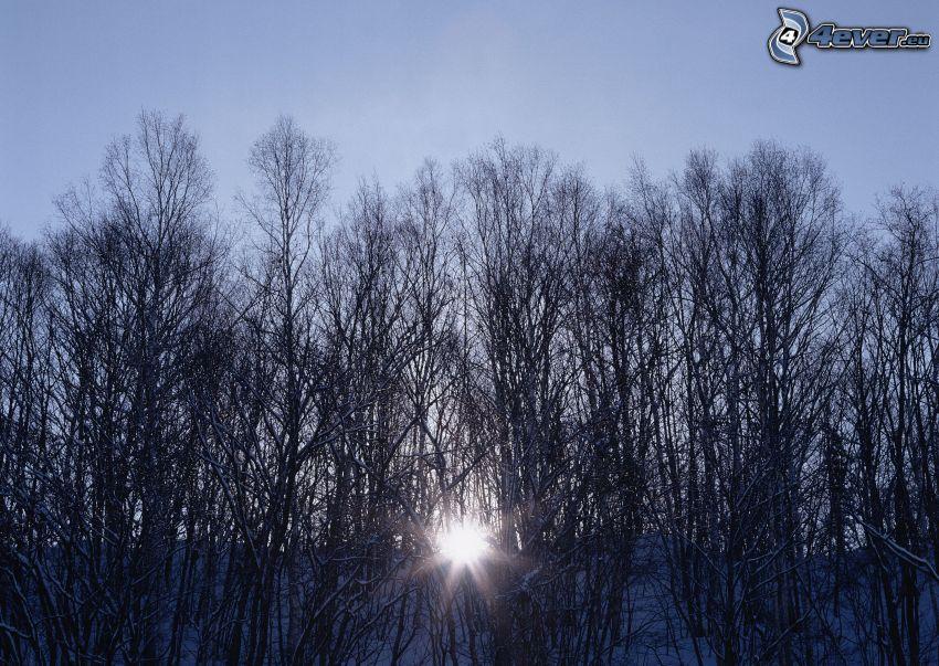 východ slnka v zime, les, stromy, slnečné lúče