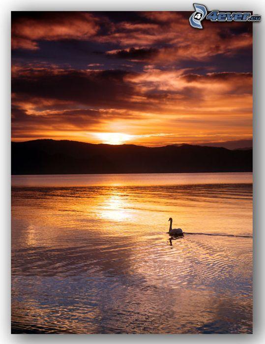 západ slnka za kopcom, slnko nad jazerom, labuť, tmavé oblaky