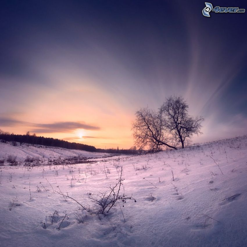 zasnežená krajina, západ slnka, stromy