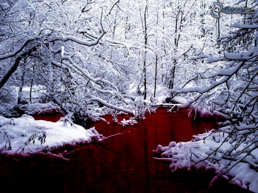 zasnežený les, močiar, potok