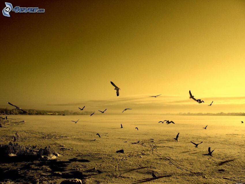 kŕdeľ vtákov, žltá obloha