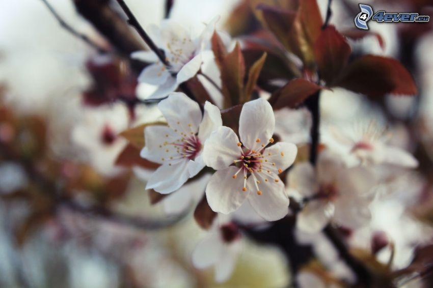 kvitnúci konárik