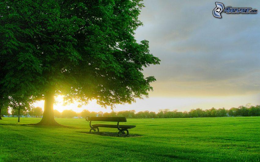 lavička v parku, lúka, strom, západ slnka