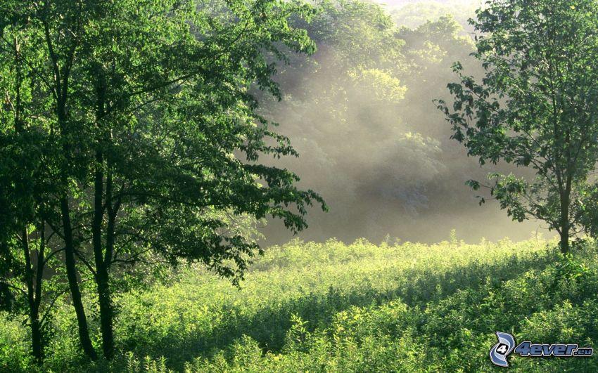 les, lúka, zeleň