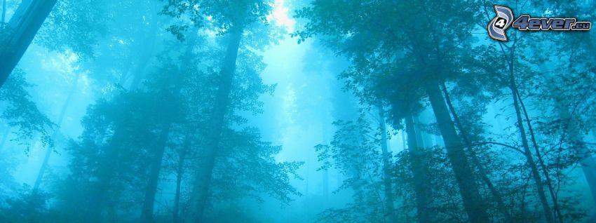 les, stromy
