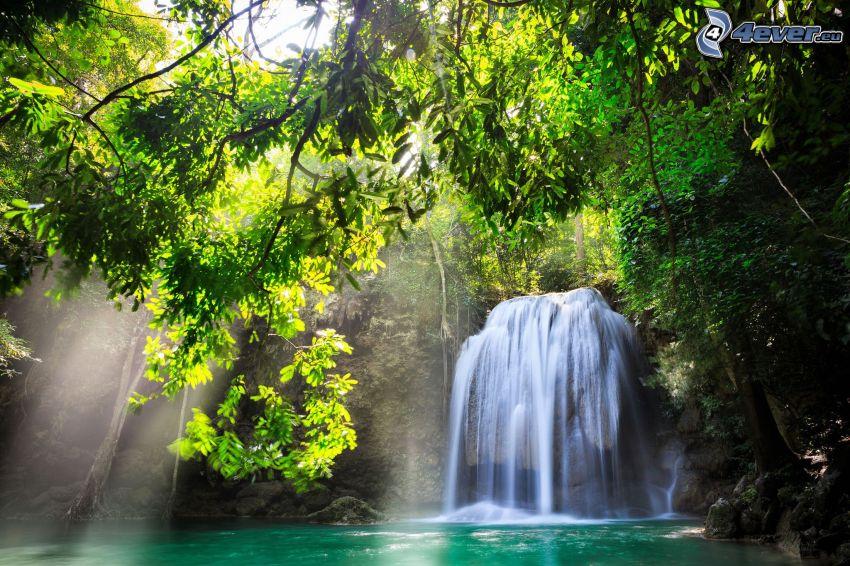 lesný vodopád, slnečné lúče v lese, strom