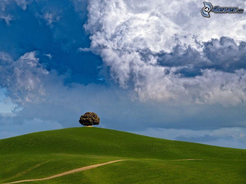 lúka, osamelý strom, poľná cesta, oblaky