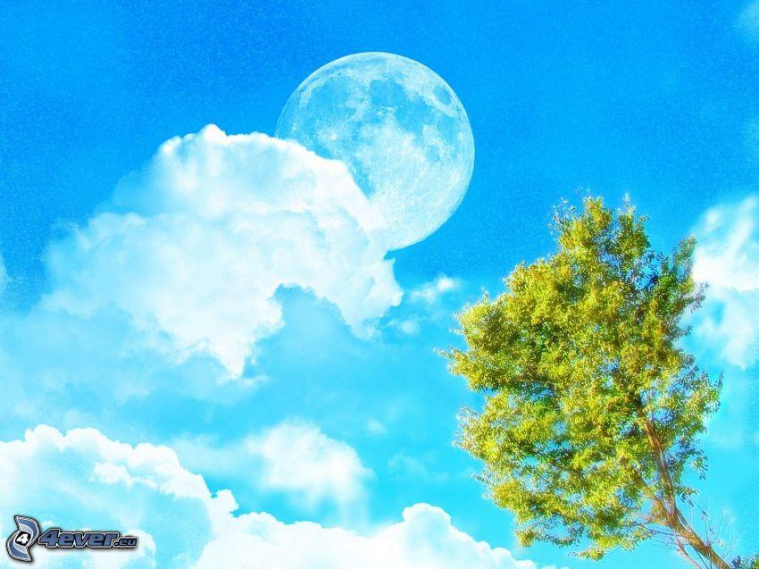 Mesiac, spln, oblaky, listnatý strom