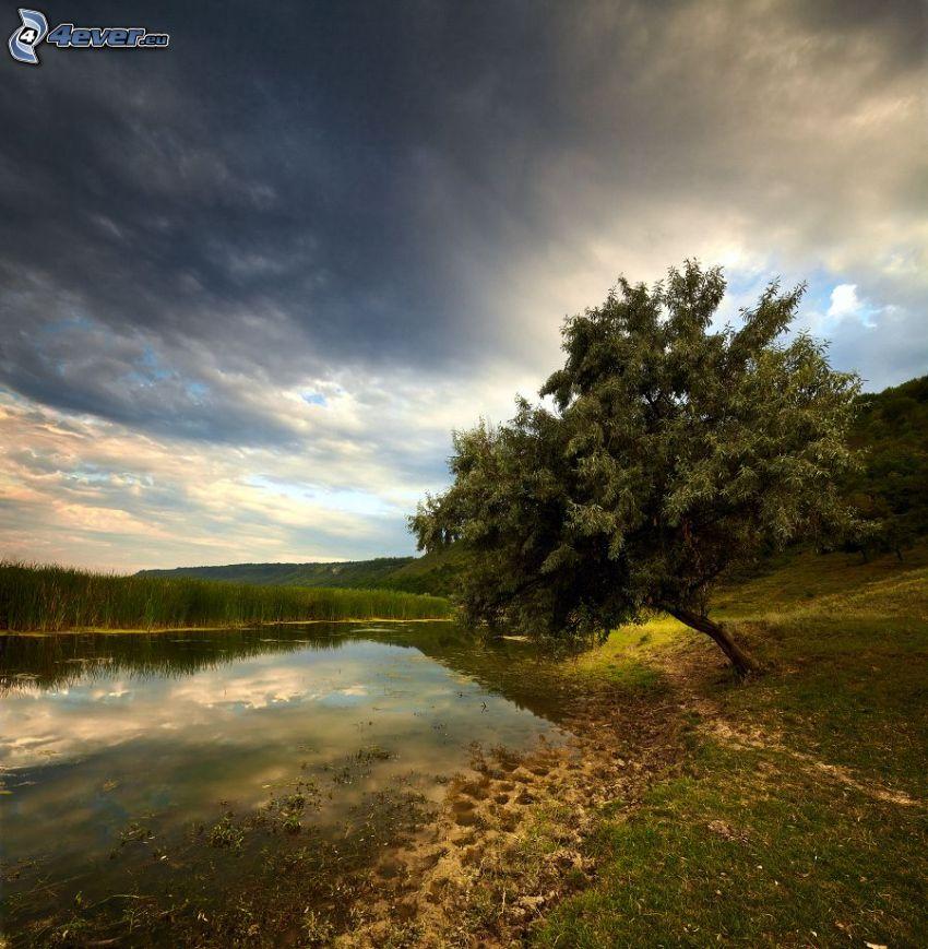 močiar, osamelý strom