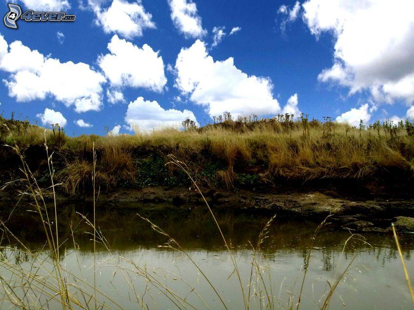 močiar, vysoká tráva, oblaky