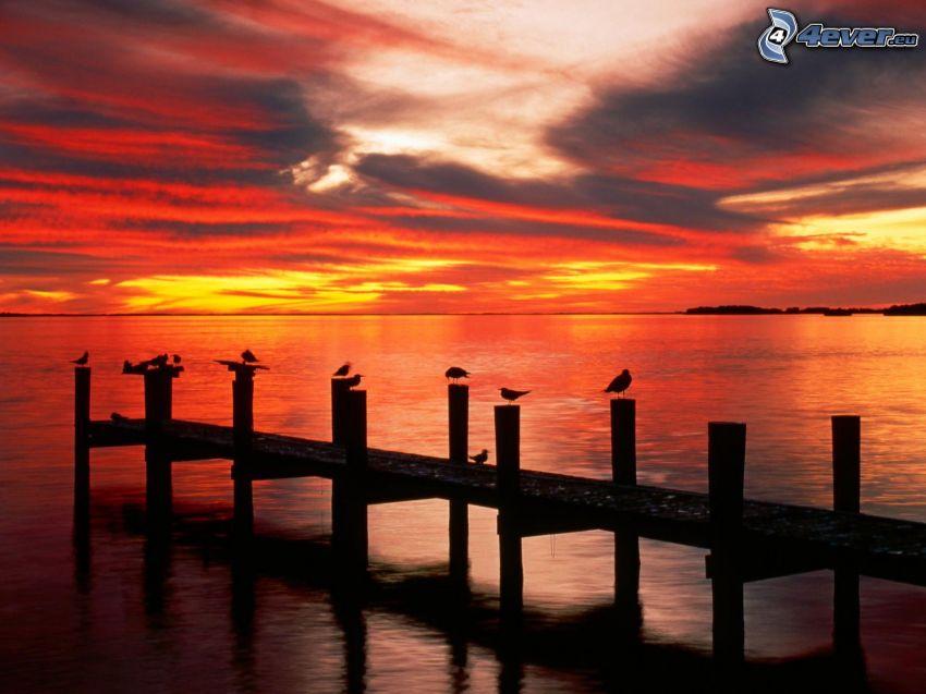 Florida, po západe slnka, oranžová obloha, more, mólo, vtáky, siluety