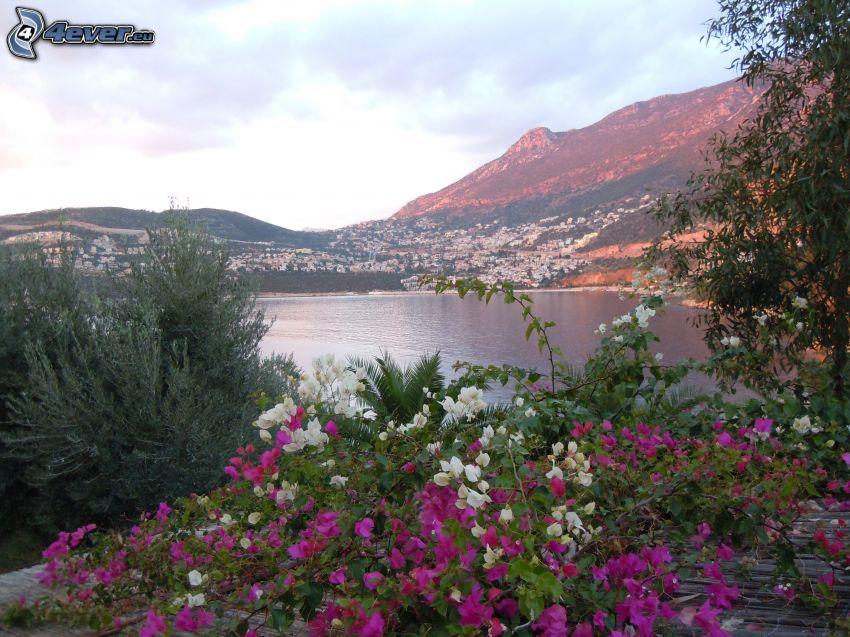 Kalkan, Turecko, kvety, more, mesto, kopec