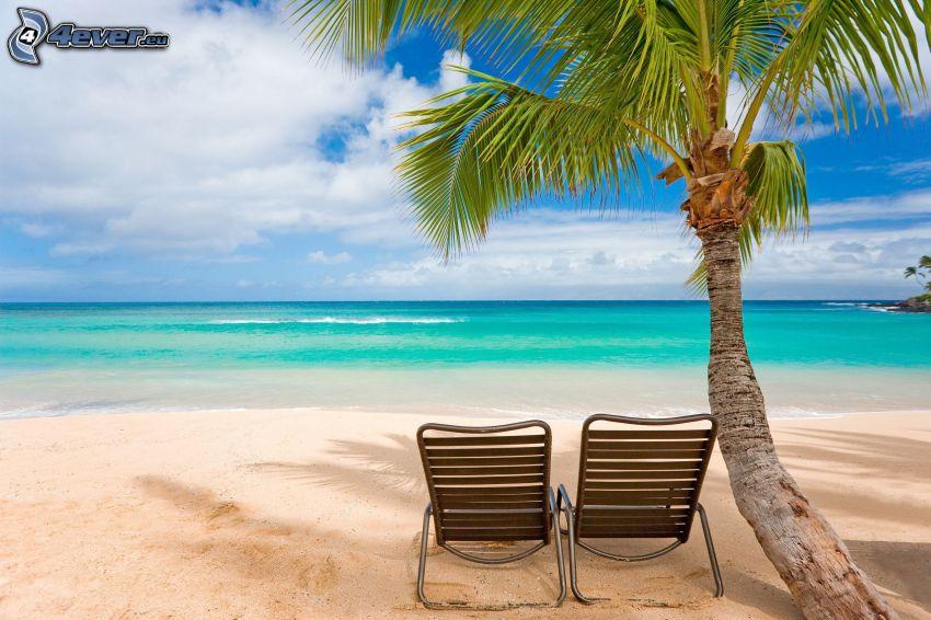 more, piesočná pláž, palma, lehátka