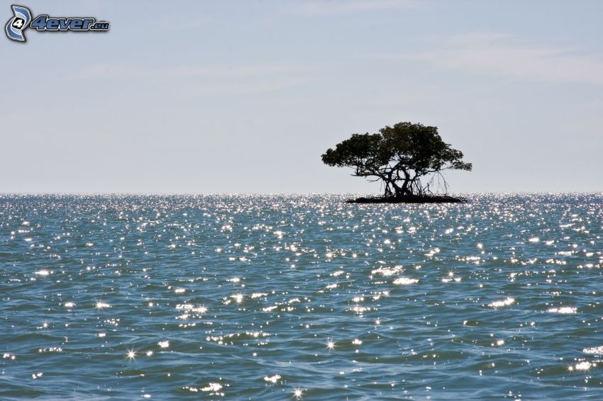 ostrovček, osamelý strom, more, odraz slnka