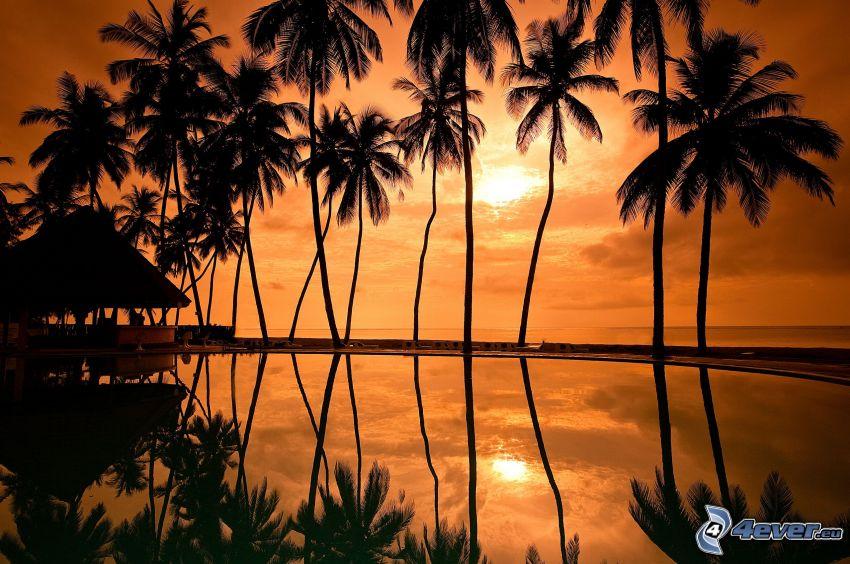 palmy, siluety stromov, západ slnka nad morom, oranžová obloha