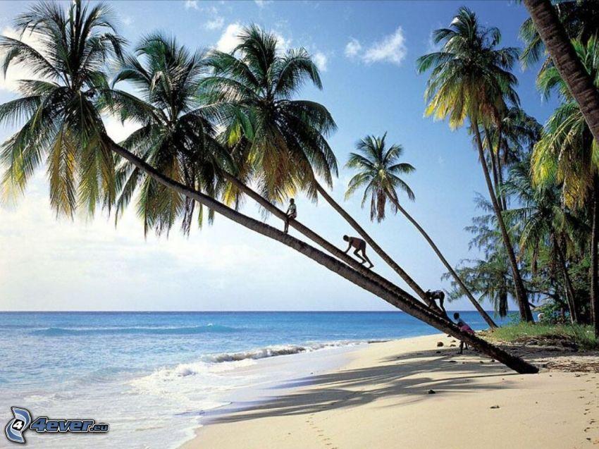 palmy na pláži, pobrežie, more
