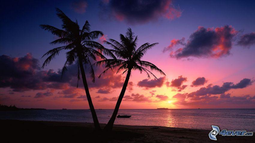 palmy na pláži, siluety, obloha, západ slnka za morom
