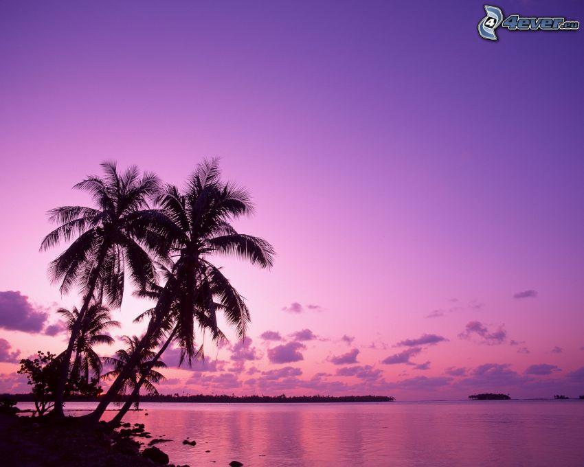 pláž po západe slnka, palma nad morom, siluety stromov, more, oblaky