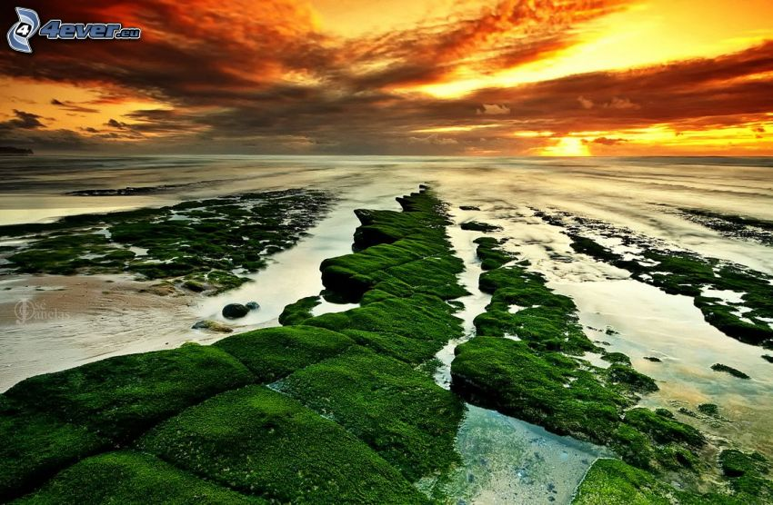 skaly v mori, mach, západ slnka za morom, tmavé oblaky, žltá obloha