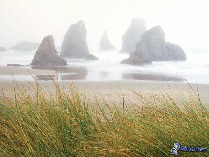 skaly v mori, vysoká tráva, piesočná pláž