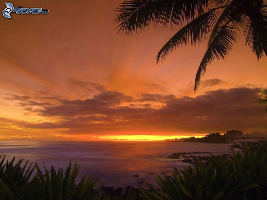 západ slnka pri mori, palma