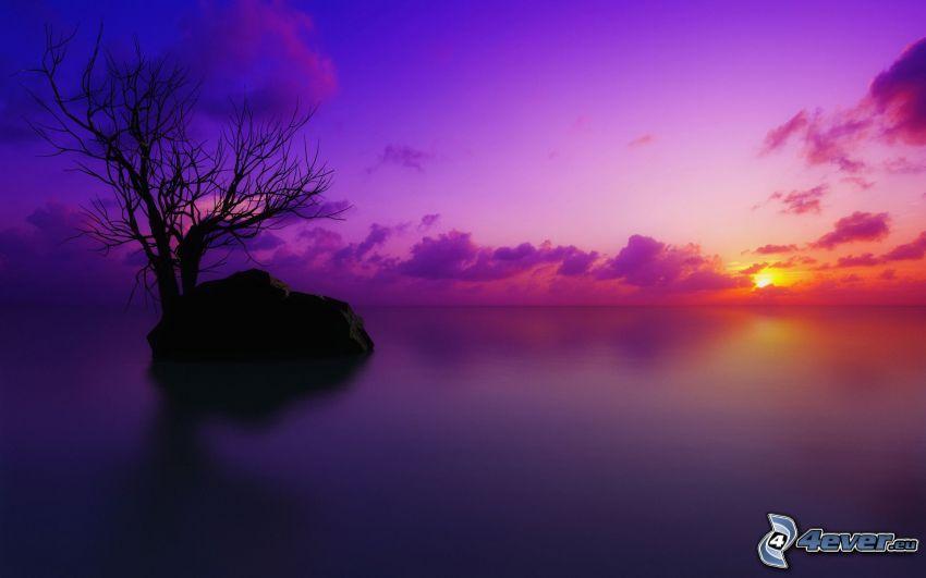 západ slnka za morom, ostrov, suchý strom