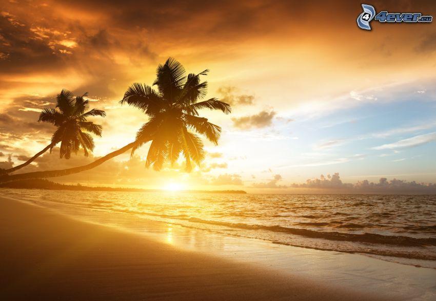 západ slnka za morom, piesočná pláž, palmy, siluety