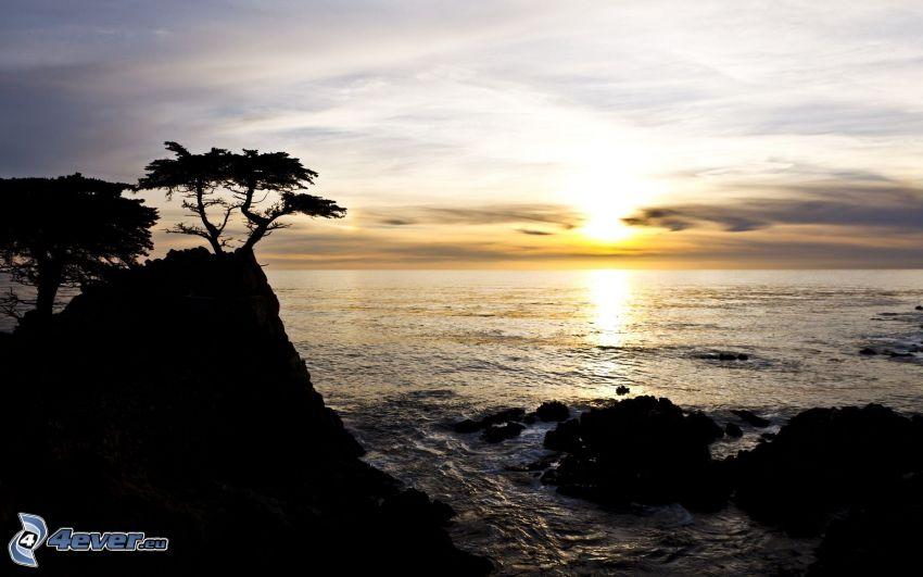 západ slnka za morom, silueta stromu