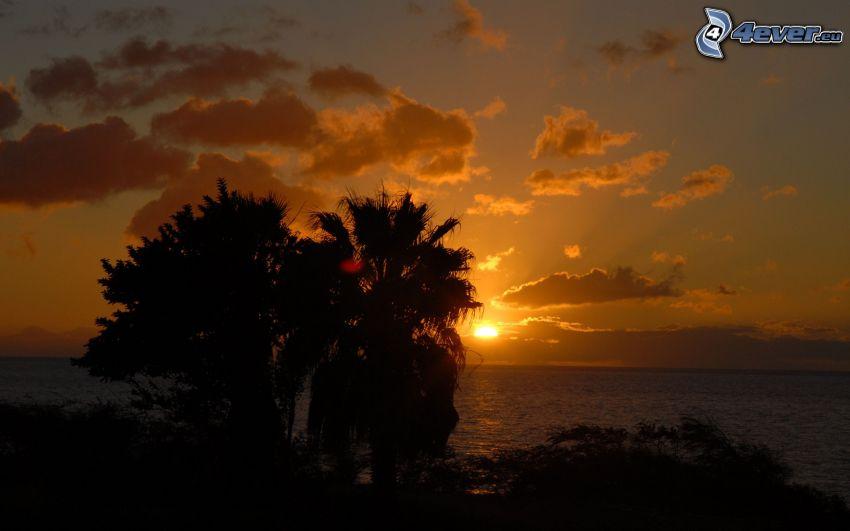 západ slnka za morom, siluety stromov, oranžová obloha