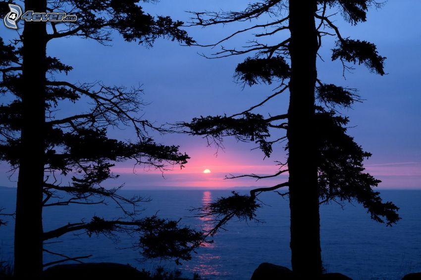 západ slnka za morom, siluety stromov