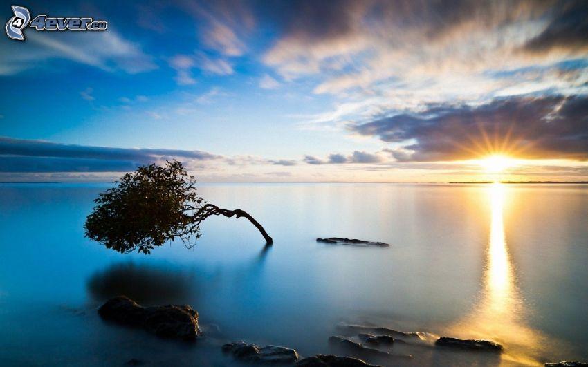 západ slnka za morom, strom, obloha, HDR