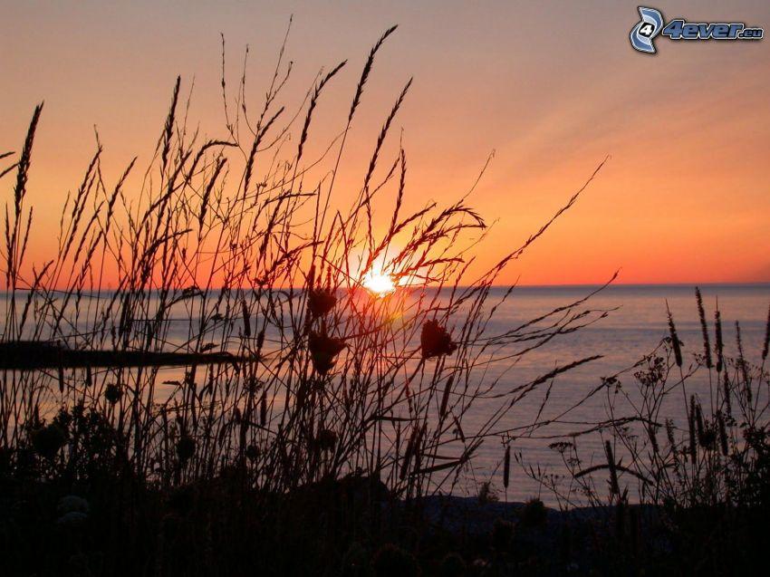 západ slnka za morom, vysoká tráva, oranžová obloha