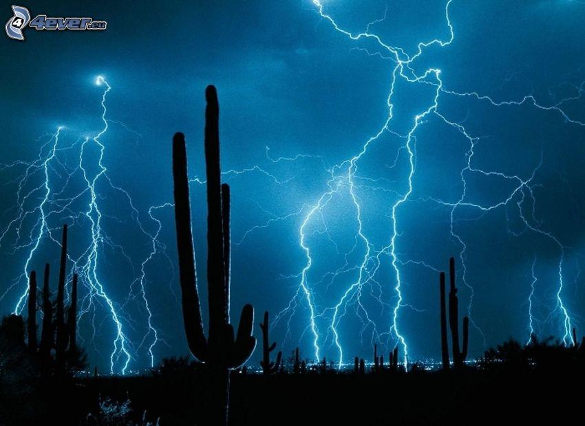 blesky, kaktusy