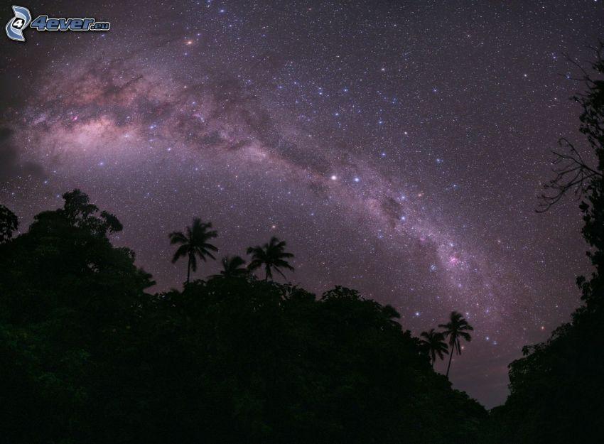 nočná obloha, hviezdna obloha, horizont, siluety stromov, džungľa