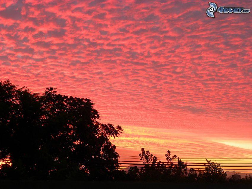 ružová obloha, siluety stromov