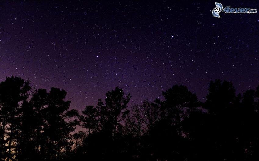 siluety stromov, hviezdna obloha