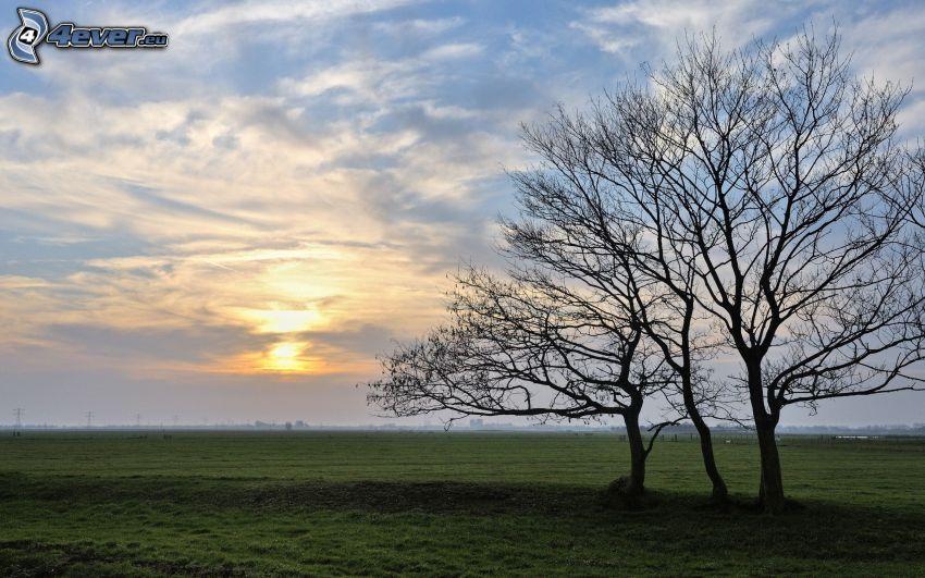 opadaný strom