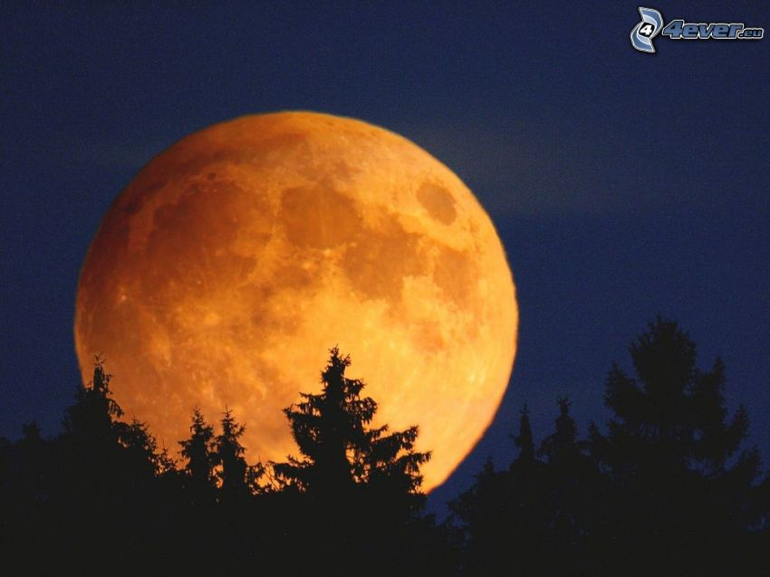 oranžový Mesiac, spln, silueta lesa, siluety stromov