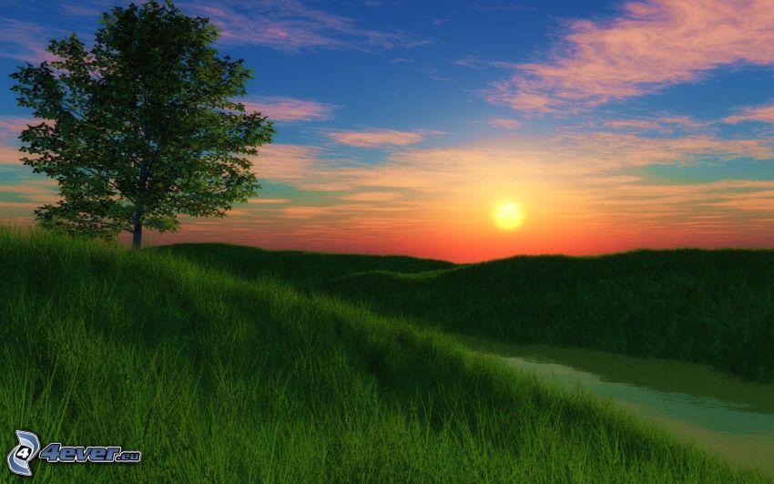 oranžový západ slnka, osamelý strom, tráva, rieka