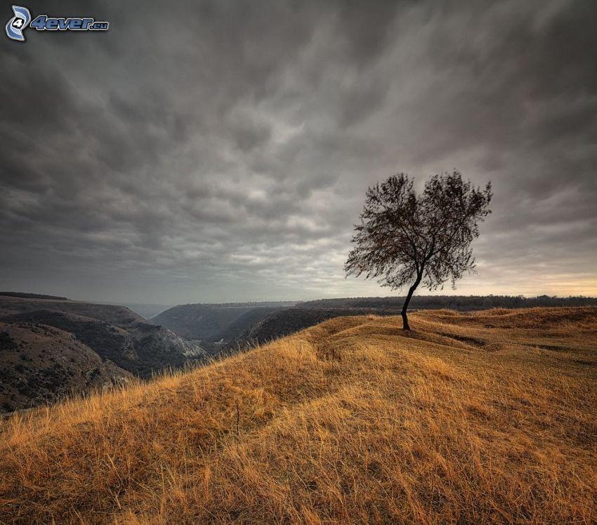 osamelý strom, kopce, suchá tráva, výhľad na krajinu, mraky