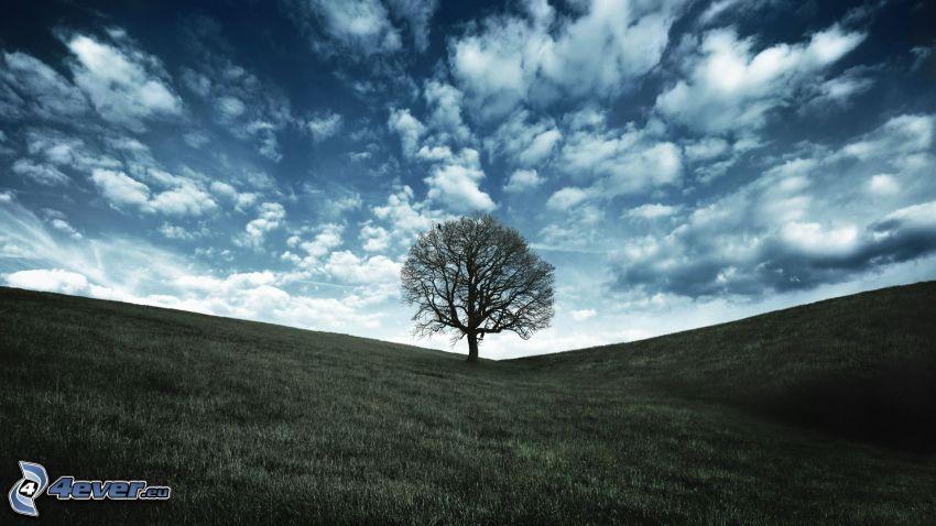 osamelý strom, lúka, oblaky