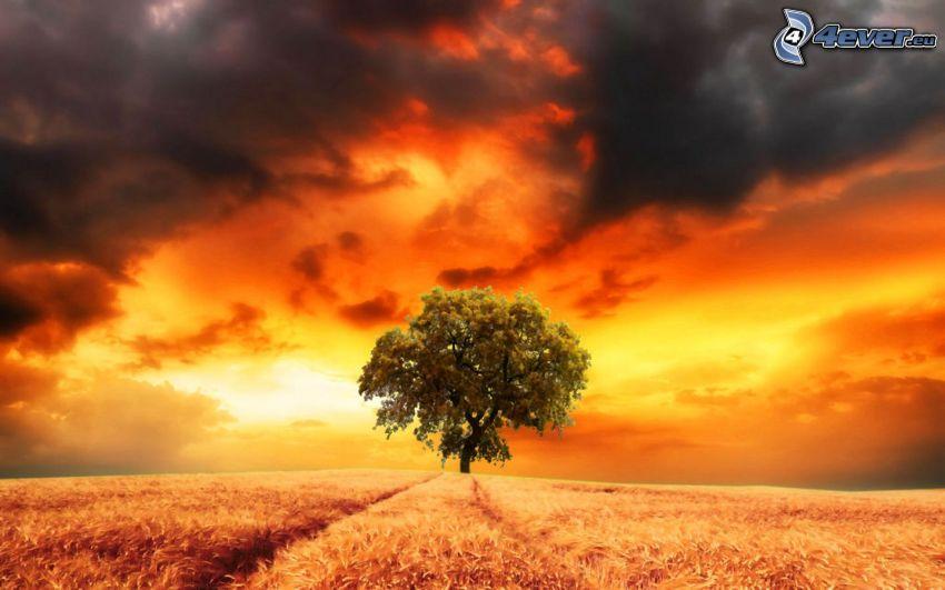 osamelý strom, pole, tmavé oblaky, žltá obloha